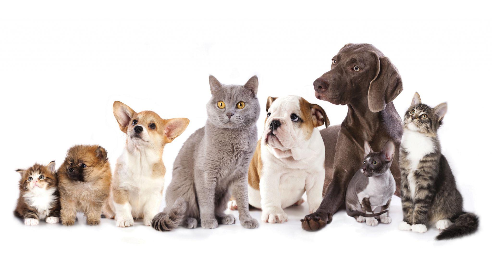 animaux de compagnie